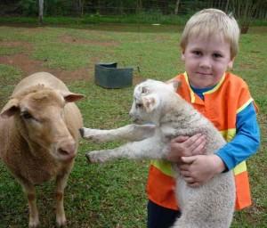 Holding lamb scho C